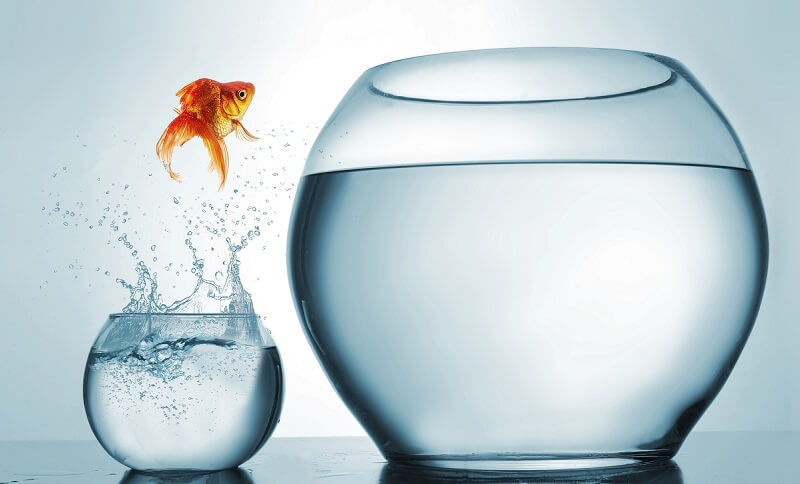 A goldfish jumping from a small bowl to a larger one to symbolize the concept of video microlearning helping to combat short attention spans